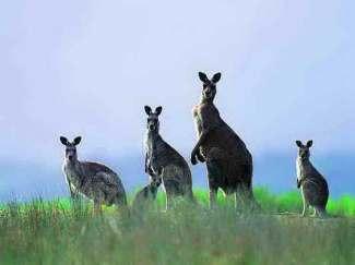 澳大利亚、新西兰十三日精华游(奥妙其中)