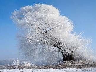 沈阳、长春、雪乡、哈尔滨双卧7日游