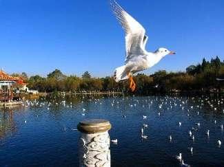 环飞:云南昆明、大理、丽江、西双版纳四飞八天游
