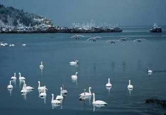 哈尔滨雪博会、亚布力滑雪SPA、中国童话雪乡双卧7日游