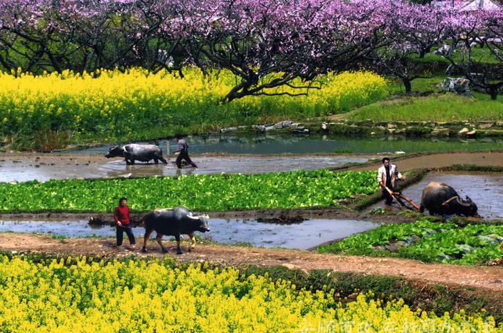 贵州黄果树天星桥陡坡塘青岩古镇湿地公园天河潭遵义双卧七日游